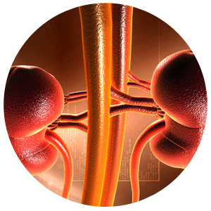 Kidney Disease and Iron Deficiency